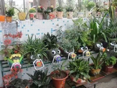 塑料瓶就能种菜养花,还买花盆干什么?