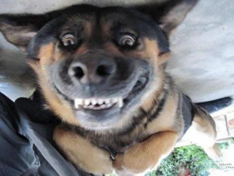 搞笑宠物图片可爱