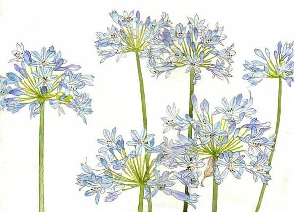 一大波儿水彩花卉素材来袭_新浪悦读