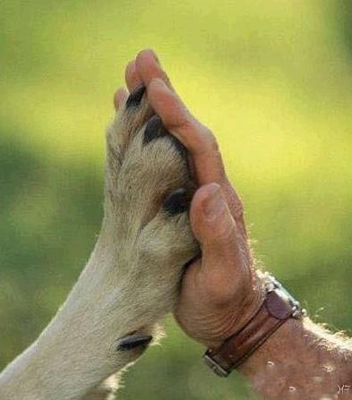 人狗电影哪里有_关于动物与人的感人故事 电影 (主要是狗) 越多越好!