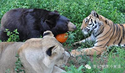 三只自然界最凶猛的动物和睦生活在一起的传奇故事.