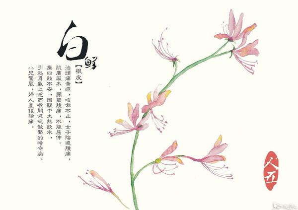 手绘本草,药性之美!