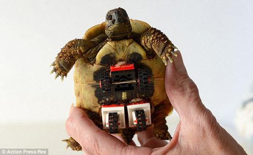 残障神龟也有春天 乐高玩具帮乌龟blade奔跑起来