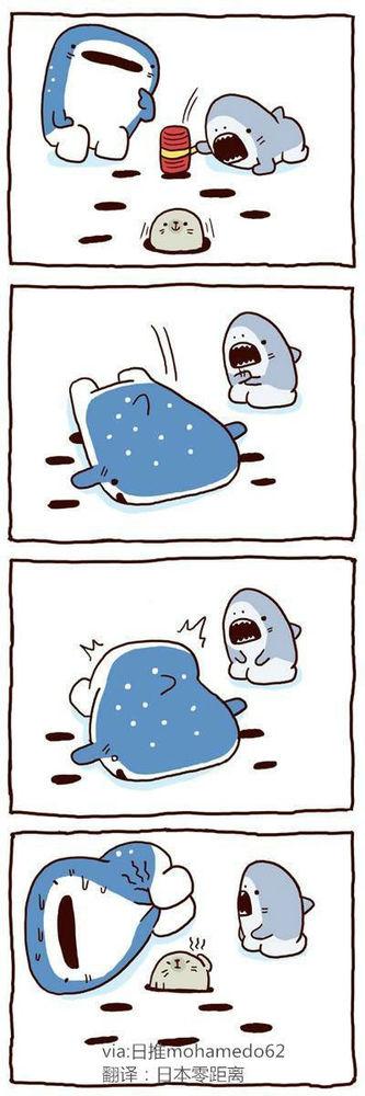 四格漫画:蠢萌鲨鱼和呆萌海豹的日常!