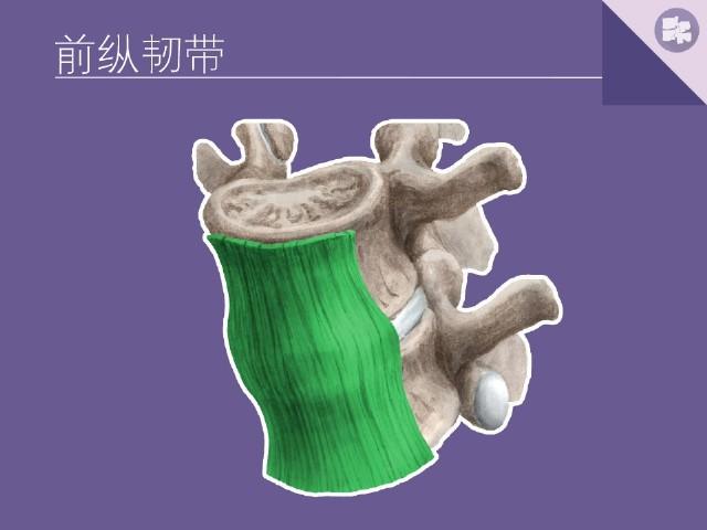 脊柱解剖结构抽记卡 设计师版