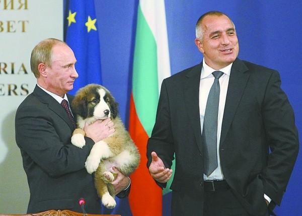 G20峰上演表情动态v表情各国动物外交官摔外交考拉东西包图片