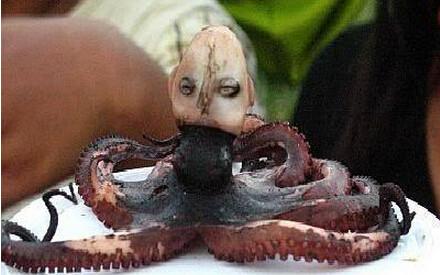 世界神秘罕见动物,震撼你的双眼