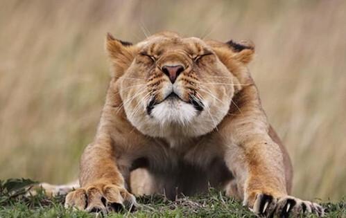 动物们伸懒腰的萌动瞬间,距离睡懒觉的日子不远啦!