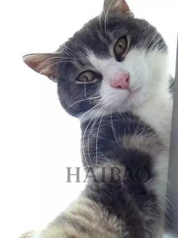 可爱猫咪萌宠壁纸笑