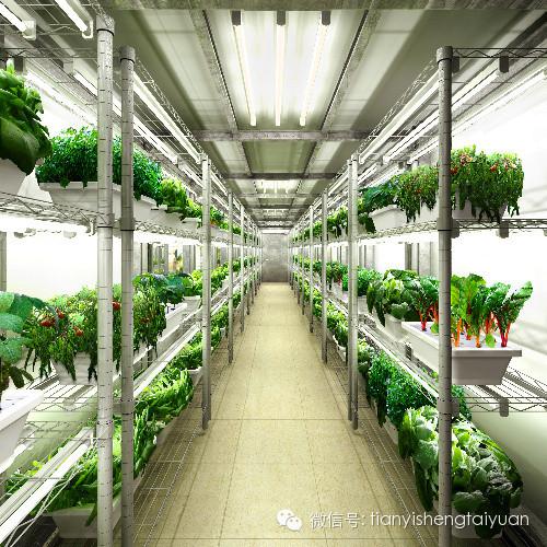 构成立体农业模式的基本单元是物种结构(多物种组合),空间结构(多