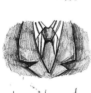 如果打的正确的领结没在三角形的顶部,也没在中间,这样的衬衫是不图片