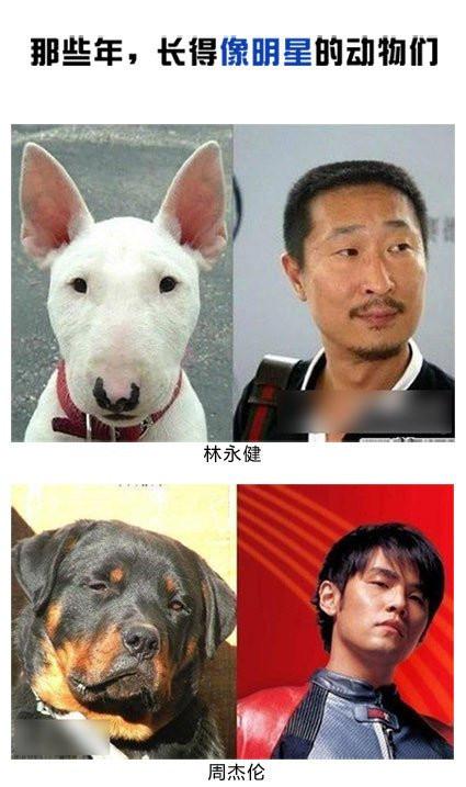 不许笑:长得像明星的动物们!