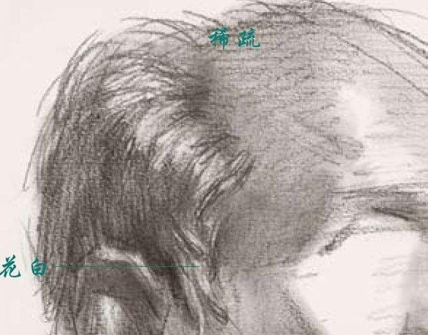 基础素描--人物头像头发的画法