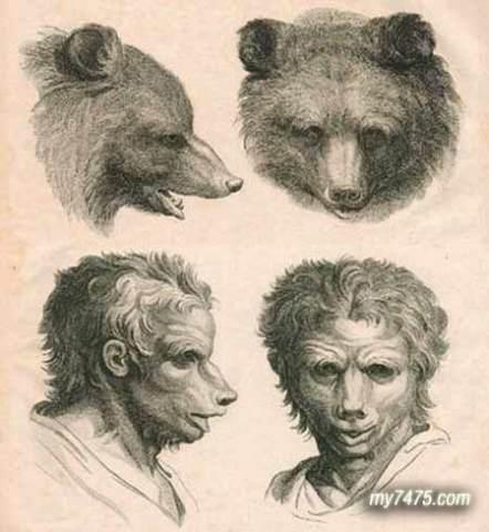 动物素描画法步骤狮子