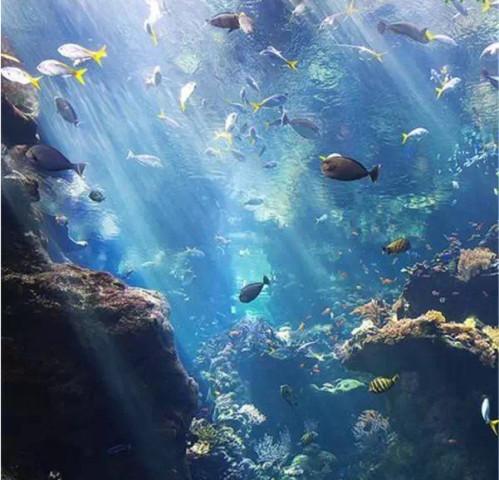 壁纸 海底 海底世界 海洋馆 水族馆 499_480