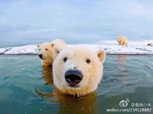 世界上最怕冷的动物是什么?