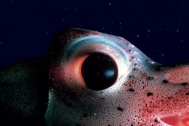 生物冷知识:你知道扇贝的眼睛长在哪吗?