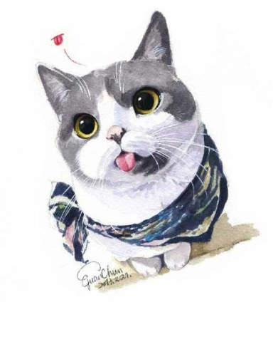 o型嘴的猫咪,永远都是惊讶的表情