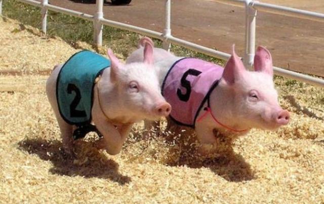 带《三只小猪》去猪圈啊不对,去农家乐看!
