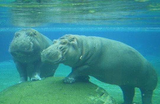 于游泳的动物