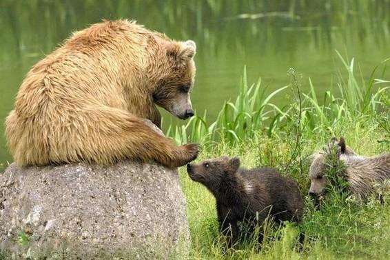 动物界的超萌亲子照
