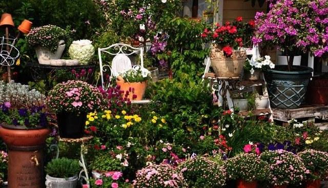 深圳的阿姆斯特丹:南山荷兰花卉小镇