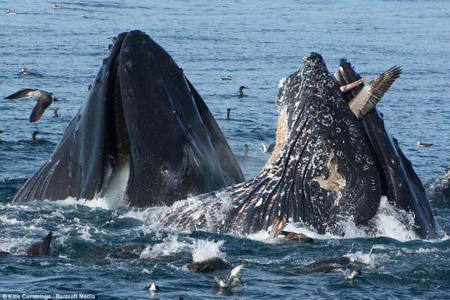 鲸鱼表体结构图