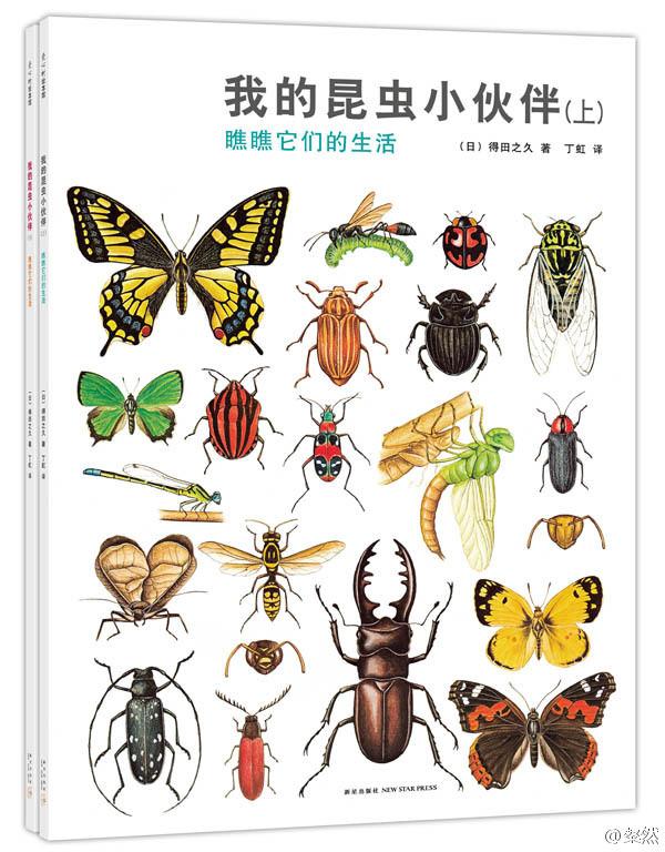 平装,大量细节与一百多种昆虫图文并茂的索引。使这套书使用年限非常长,性价比很高。既突出了昆虫之间的差别,也强调了昆虫习性的相似。言浅意深。是引导孩子做昆虫笔记很好的标杆。
