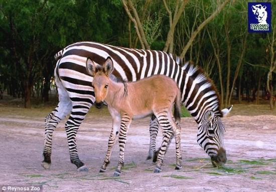 带黑白条纹的奇怪动物们