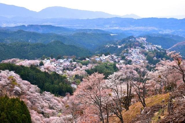 【史上最低】特好使的日本个人旅游签证329元
