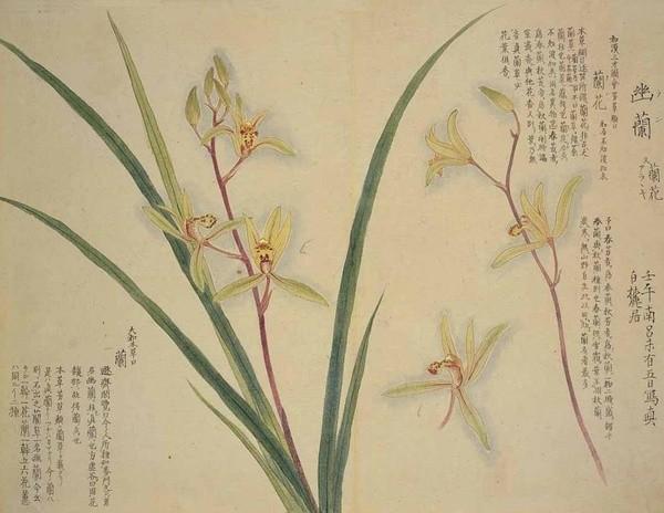 工笔|花卉植物图谱收藏篇