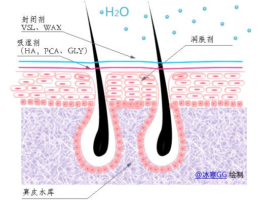吸湿剂帮助将真皮层的水分吸至表皮层