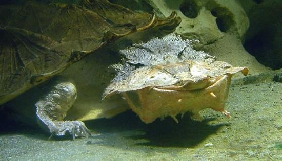 玛塔龟是世界上最快乐的龟吗