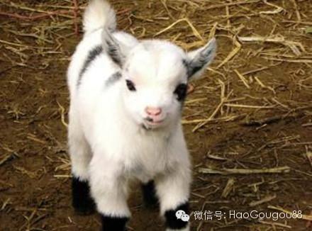 动物小时候的样子!