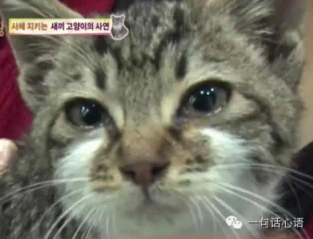 小猫流下伤心的泪水