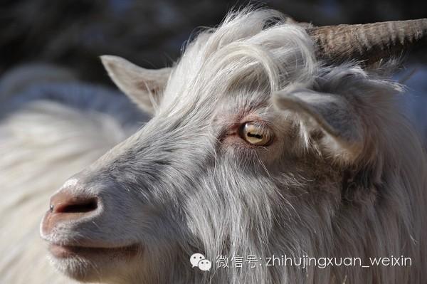 动物的照片来看瞳孔形状