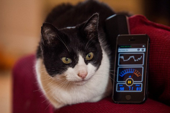 咆哮猫破吉尼斯世界纪录