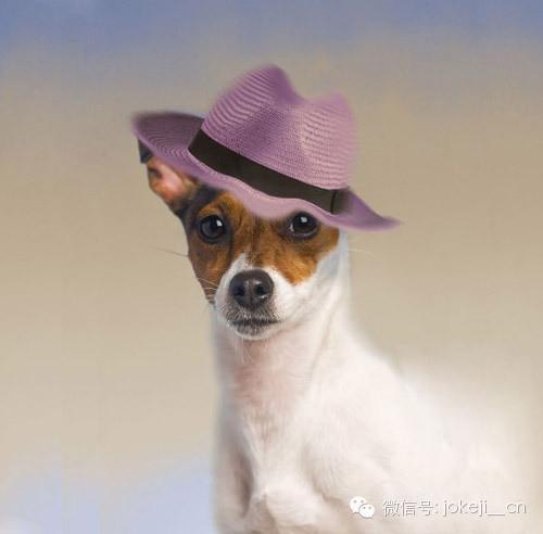 搞笑图片:可爱狗狗的漂亮装扮.