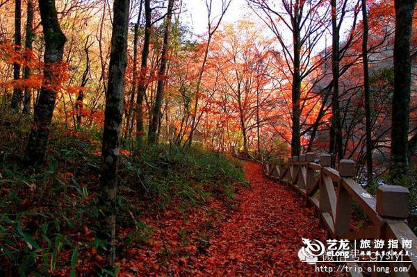 鸡冠山森林公园   四川省成都崇州市西北   西岭国家森林公园